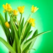 Stock Photo: Yellow spring flowers with green leaves on green background