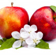 Two Juicy Red Apple and flowers on a white background — Stock Photo