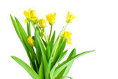 Seven Yellow spring flowers with green leaves Isolated Located c — Stock Photo