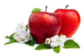 Two Juicy Red Apple with flowers and water droplets on a white b — Stock Photo