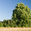 Beautiful woodland scenery — Stock Photo