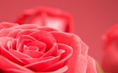 Red roses close-up on the red background — Stock fotografie