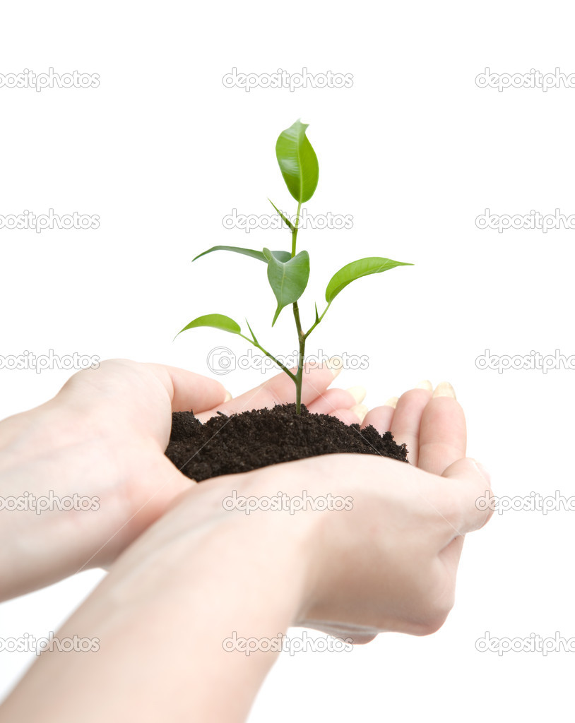 Young plant in human hands on light background — Stock Photo #10957405