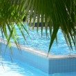Palm leaves over swimming pool — Stock Photo