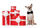Pale yellow doggy sits near the gifts — Стоковое фото