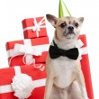 Pale yellow doggy in green fool's cap near the presents — Stock Photo