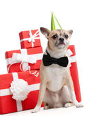 Blasses gelb doggy in grün fool's cap in der nähe die geschenke — Stockfoto