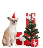 Pale yellow dog near the presents and Christmas tree — Stock Photo
