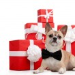 Pale yellow doggy lies near presents — Stock Photo #12417469