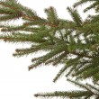 Branch of the spruce — Stock Photo #12364054