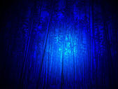 Magic blue light in the forest, high pine-tree diversity. — Stock Photo