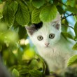 Young cat on tree. — Stock Photo