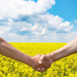 Two farmer's hands handshake at the harvest rape field. — Stock Photo
