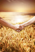 Two farmer's hands handshake at the harvest of wheat field. — Stockfoto