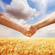 Farmers handshake at wheat field background. - Zdjcie stockowe