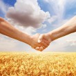 Farmers handshake at wheat field background. — Stock Photo