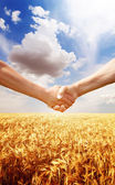 Farmers handshake at wheat field background. — Photo