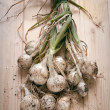FRESH-PICKED ONIONS - Stock Photo