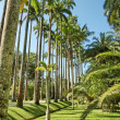 Botanic garden — Stock Photo #10932821