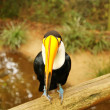 Tucan - Stock Photo