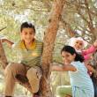 Stock Photo: Children playing and climbing the tree