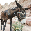 Donkey — Stock Photo #12096382