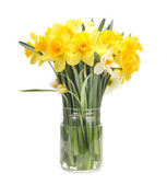 Narcissus flower bouquet — Stock Photo