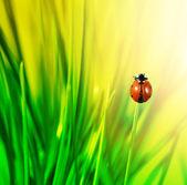Beruška v zelené trávě — Stock fotografie
