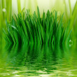 Stock Photo: Grass and water background