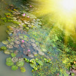Sunshine and pond — Stock Photo