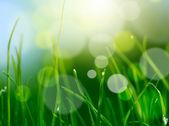 Macio desfocar o fundo de grama verde — Foto Stock