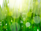 Soft blur green grass background — Stock Photo