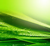 Grass leaf with water drops — Stock Photo
