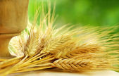 Spikes of wheat — Stock Photo