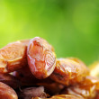 Fresh dates on green background — Stock Photo #11467924