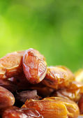 Fresh dates on green background — Stock Photo