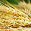 Stock Photo: Bundle of Wheat spikes