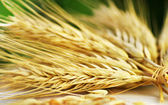 Bundle of Wheat spikes — Stock Photo