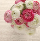 Pink and white ranunculus with script — Stock Photo
