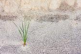 Grass Stalk in Sand Dune — Stock Photo