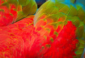 Parrot's feathers background — Stock Photo