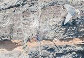 Gaivota sobre o fundo de rocha vulcânica — Foto Stock