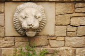Stone background with lion head — Stock Photo