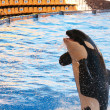 Orca show in Loro parque, Tenerife, Spain 19.05.2012 — Stock Photo