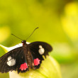 Butterfly on leaf — Stock Photo #12028117