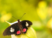 Butterfly on the leaf — Stock Photo