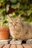 Portret kota — Zdjęcie stockowe