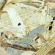 Background of wood chipboard - Stock Photo