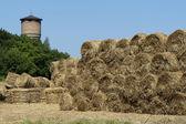 The rural landscape — Stock Photo