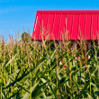 Red Roof in a Corn Field - Stock Photo